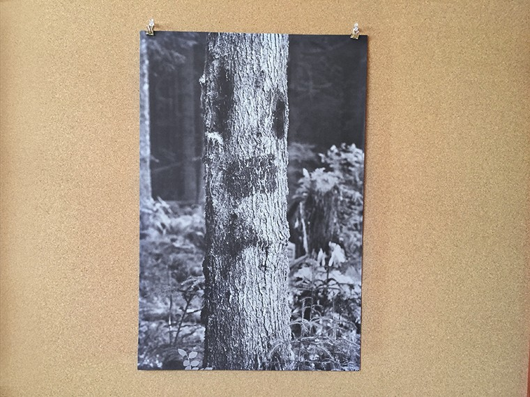 fold-out poster of a black and white photograph of a tree face
